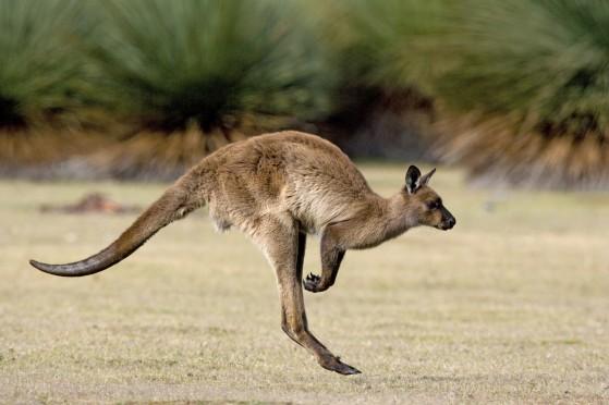 Expédiez en Australie vos colis de Noël !